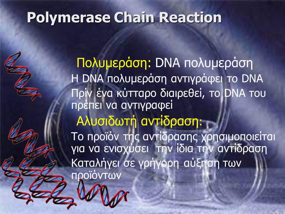 Polymerase Chain Reaction Πολυμεράση: DNA πολυμεράση Η DNA πολυμεράση αντιγράφει το DNA Πρίν ένα κύτταρο διαιρεθεί, το DNA του πρέπει να αντιγραφεί Αλ