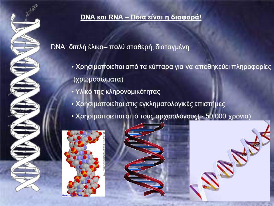 DNA: διπλή έλικα– πολύ σταθερή, διαταγμένη Χρησιμοποιείται από τα κύτταρα για να αποθηκεύει πληροφορίες (χρωμοσώματα) Υλικό της κληρονομικότητας Χρησι