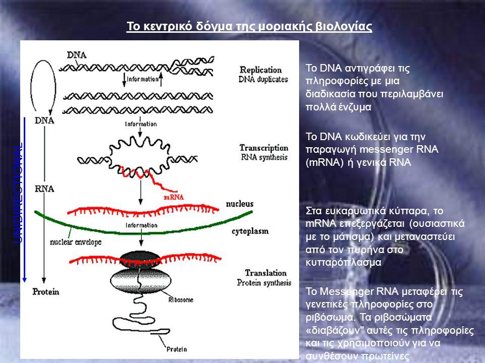 Το DNA αντιγράφει τις πληροφορίες με μια διαδικασία που περιλαμβάνει πολλά ένζυμα Το DNA κωδικεύει για την παραγωγή messenger RNA (mRNA) ή γενικά RNA