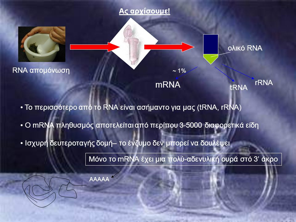 Ας αρχίσουμε! ολικό RNA tRNA rRNA mRNA ~ 1% Το περισσότερο από το RNA είναι ασήμαντο για μας (tRNA, rRNA) Ο mRNA πληθυσμός αποτελείται από περίπου 3-5