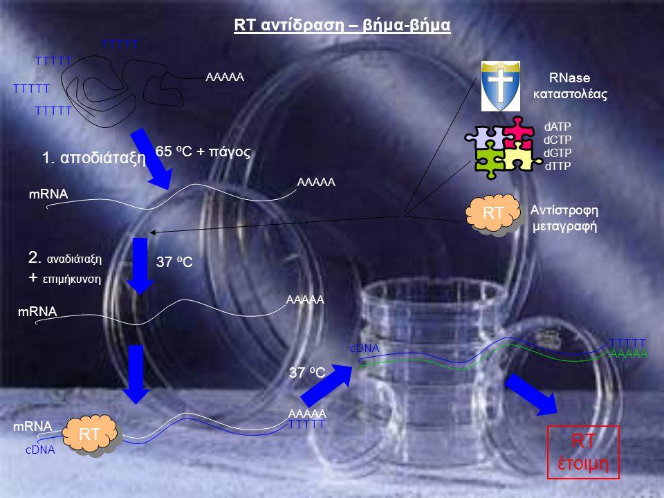 RT αντίδραση – βήμα-βήμα AAAAA 65 ºC + πάγος 37 ºC TTTTT Αντίστροφη μεταγραφή dATP dCTP dGTP dTTP RNase καταστολέας mRNA 1. αποδιάταξη AAAAA TTTTT mRN