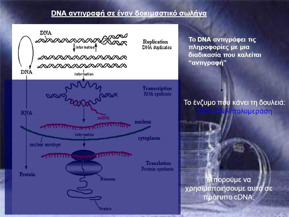 """Το DNA αντιγράφει τις πληροφορίες με μια διαδικασία που καλείται """"αντιγραφή"""" DNA αντιγραφή σε έναν δοκιμαστικό σωλήνα Μπορούμε να χρησιμοποιήσουμε αυτ"""