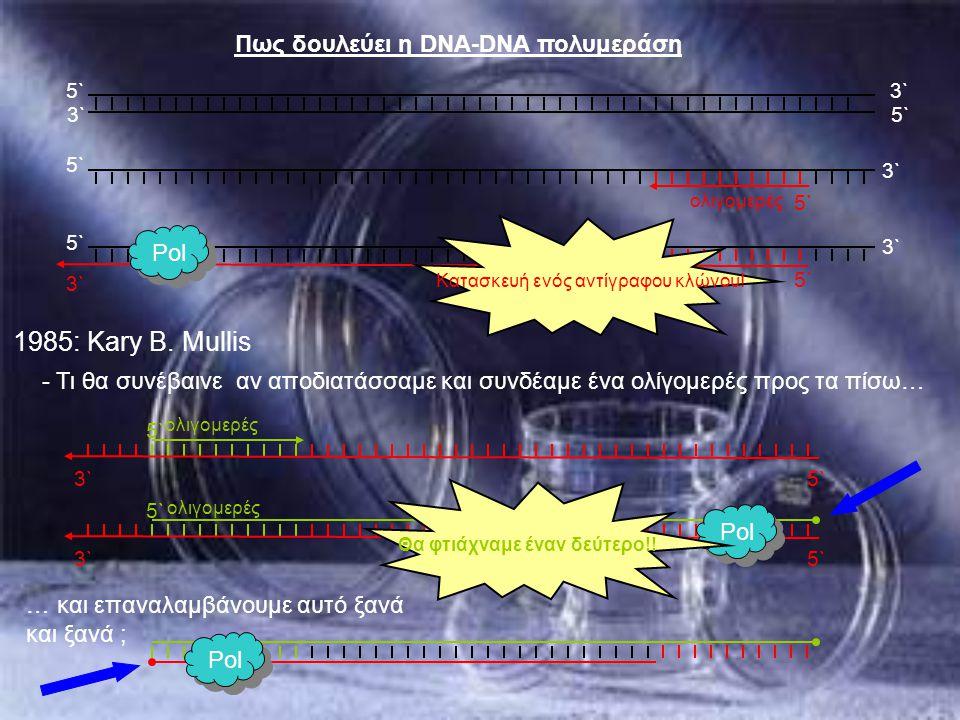 5` 3` Πως δουλεύει η DNA-DNA πολυμεράση 5` 3`5` 3` 5` ολιγομερές - Τι θα συνέβαινε αν αποδιατάσσαμε και συνδέαμε ένα ολίγομερές προς τα πίσω… 1985: Ka