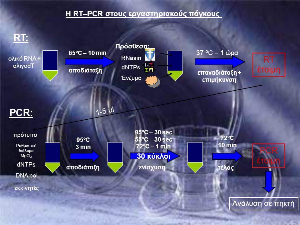 Η RT–PCR στους εργαστηριακούς πάγκους ολικό RNA + ολιγοdT 37 ºC – 1 ώρα επαναδιάταξη + επιμήκυνση 65ºC – 10 min αποδιάταξη Πρόσθεση: Ένζυμο dNTPs RNas
