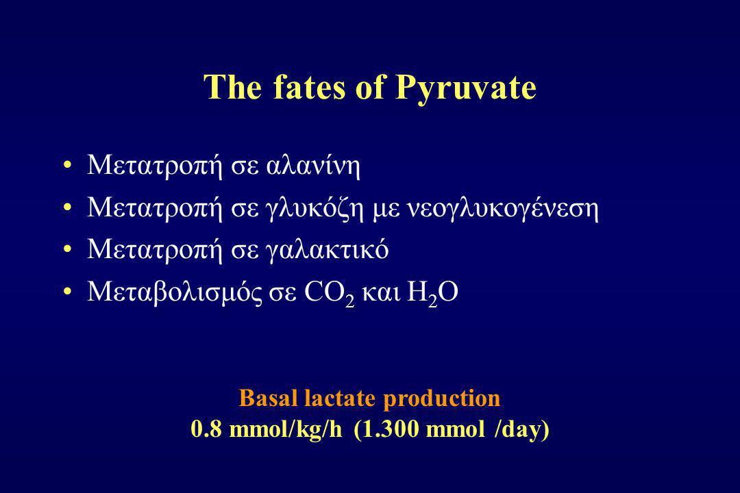 The fates of Pyruvate Μετατροπή σε αλανίνη Μετατροπή σε γλυκόζη με νεογλυκογένεση Μετατροπή σε γαλακτικό Μεταβολισμός σε CΟ 2 και Η 2 Ο Basal lactate