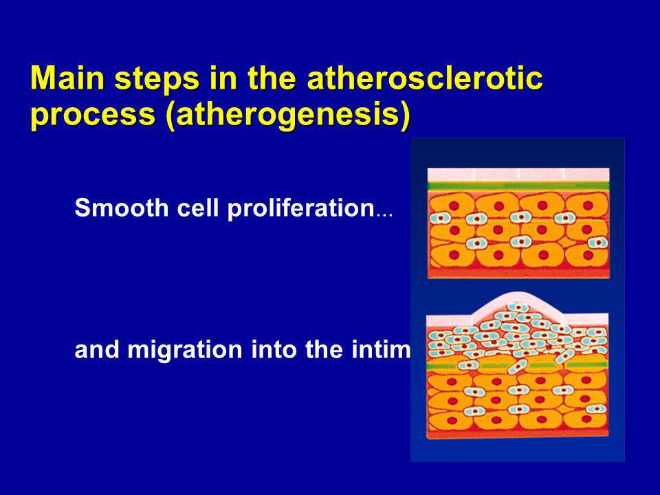 Main steps in the atherosclerotic process (in vivo) a Normal intima (rabbit)Thickened intima (rabbit) Soma et al, 1994