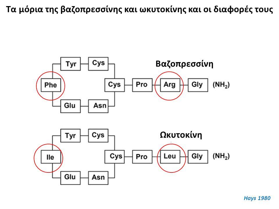 Τα μόρια της βαζοπρεσσίνης και ωκυτοκίνης και οι διαφορές τους Βαζοπρεσσίνη Ωκυτοκίνη Hays 1980