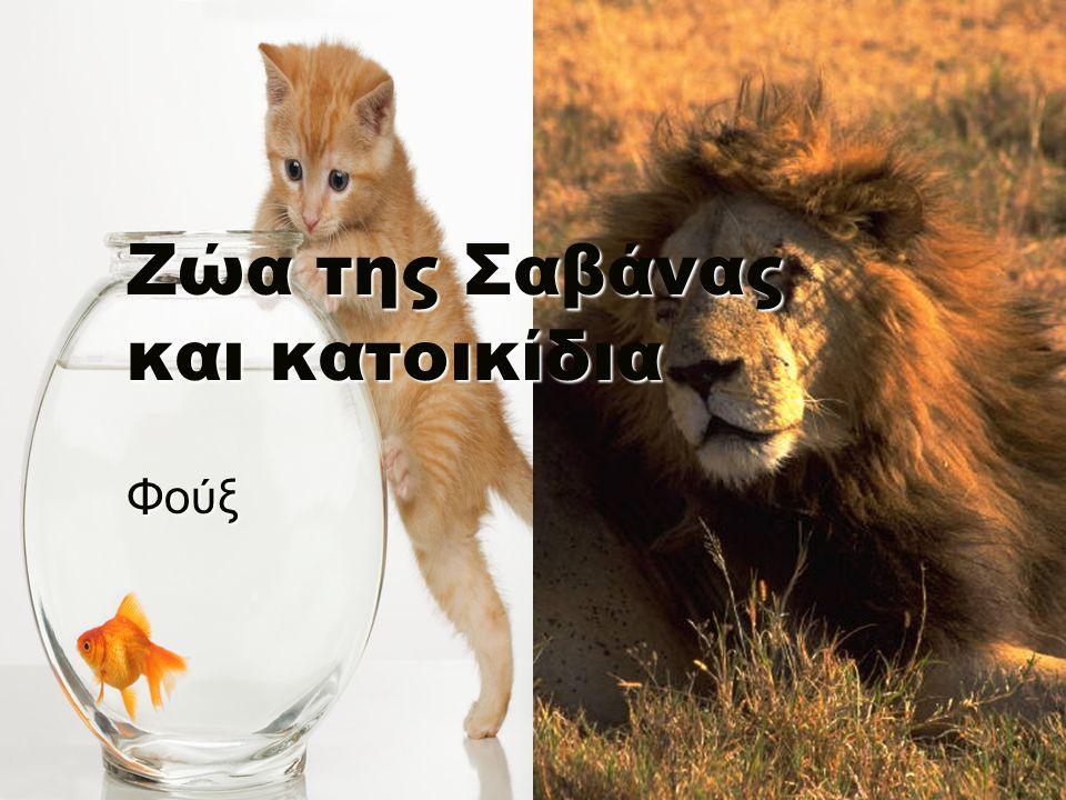 Ζώα της Σαβάνας και κατοικίδια Φούξ