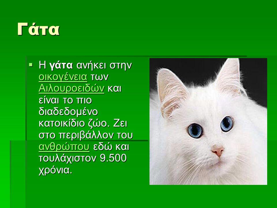 Γάτα  Η γάτα ανήκει στην οικογένεια των Αιλουροειδών και είναι το πιο διαδεδομένο κατοικίδιο ζώο. Ζει στο περιβάλλον του ανθρώπου εδώ και τουλάχιστον