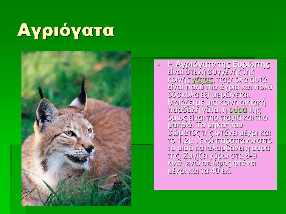 Αγριόγατα  Η Αγριόγατα της Ευρώπης είναι στενή συγγενής της κοινής γάτας, παρ' όλα αυτά είναι πολύ πιο άγρια και πολύ δύσκολα εξημερώνεται. Μοιάζει μ