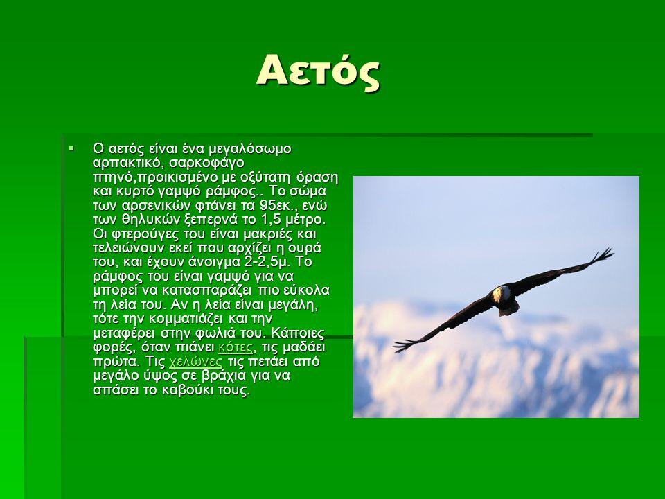 Αετός Αετός  Ο αετός είναι ένα μεγαλόσωμο αρπακτικό, σαρκοφάγο πτηνό,προικισμένο με οξύτατη όραση και κυρτό γαμψό ράμφος.. Το σώμα των αρσενικών φτάν