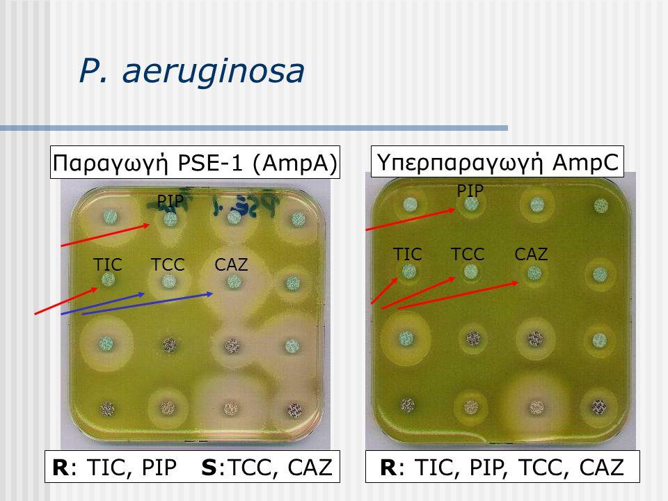 P. aeruginosa Παραγωγή PSE-1 (AmpA) Υπερπαραγωγή AmpC TICTCCCAZ TICTCCCAZ R: TIC, PIP S:TCC, CAZ PIP R: TIC, PIP, TCC, CAZ