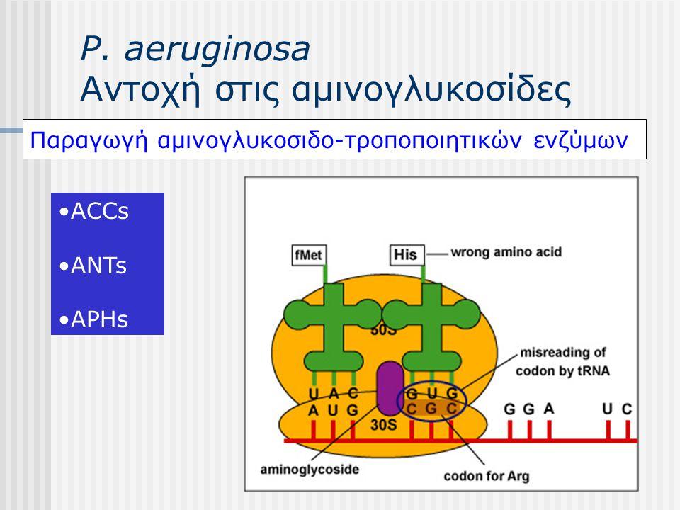 P. aeruginosa Αντοχή στις αμινογλυκοσίδες Παραγωγή αμινογλυκοσιδο-τροποποιητικών ενζύμων ACCs ANTs APHs