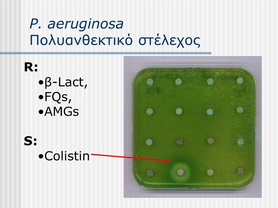P. aeruginosa Πολυανθεκτικό στέλεχος R: β-Lact, FQs, AMGs S: Colistin
