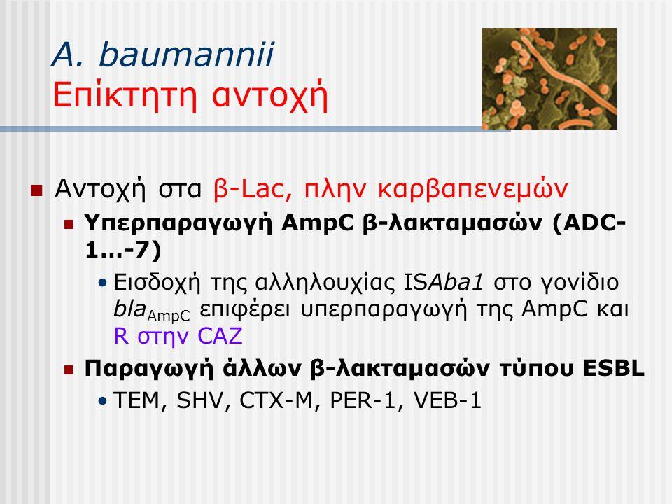 A. baumannii Επίκτητη αντοχή Αντοχή στα β-Lac, πλην καρβαπενεμών Υπερπαραγωγή AmpC β-λακταμασών (ADC- 1…-7) Εισδοχή της αλληλουχίας ISAba1 στο γονίδιο