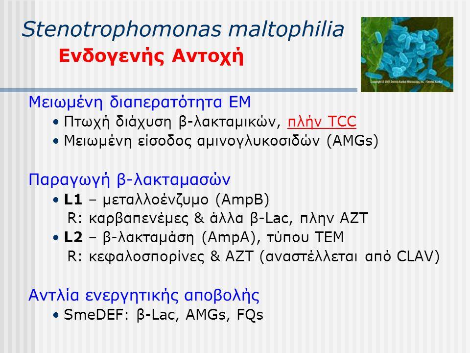 Stenotrophomonas maltophilia Ενδογενής Αντοχή Μειωμένη διαπερατότητα ΕΜ Πτωχή διάχυση β-λακταμικών, πλήν TCC Μειωμένη είσοδος αμινογλυκοσιδών (AMGs) Π