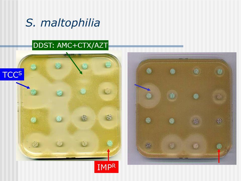 S. maltophilia TCC IMP CP OF GN CFTCTB AN TZP DDST: AMC+CTX/AZT IMP R TCC S