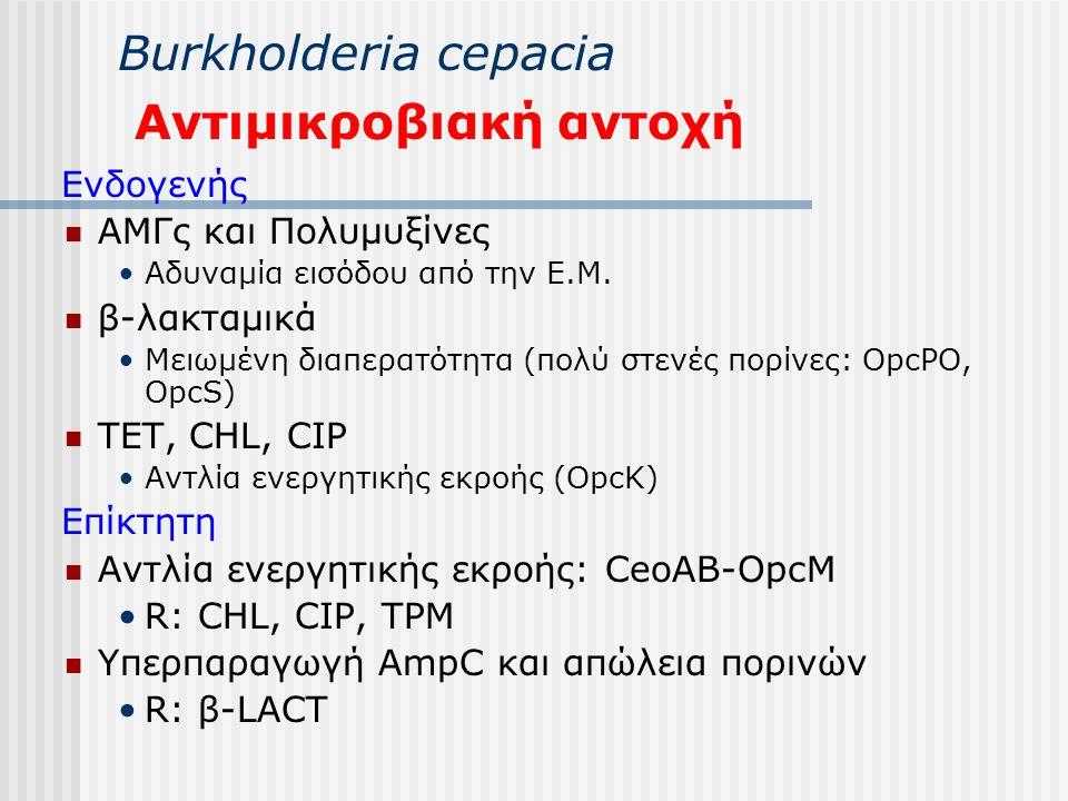 Βurkholderia cepacia Αντιμικροβιακή αντοχή Ενδογενής ΑΜΓς και Πολυμυξίνες Αδυναμία εισόδου από την Ε.Μ. β-λακταμικά Μειωμένη διαπερατότητα (πολύ στενέ