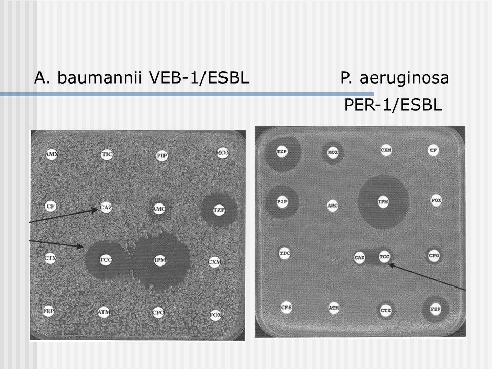 PER-1/ESBL A. baumannii VEB-1/ESBLP. aeruginosa