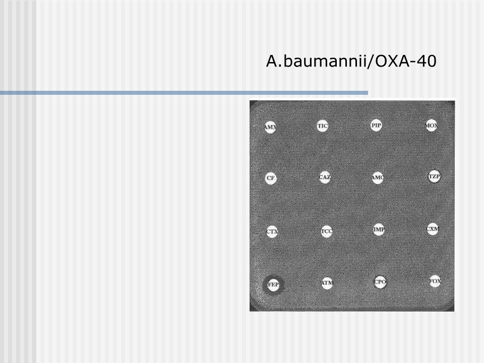 A.baumannii/OXA-40