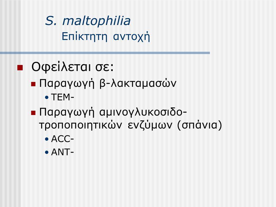 S. maltophilia Επίκτητη αντοχή Οφείλεται σε: Παραγωγή β-λακταμασών ΤΕΜ- Παραγωγή αμινογλυκοσιδο- τροποποιητικών ενζύμων (σπάνια) ACC- ANT-