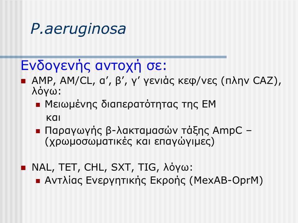 P.aeruginosa Ενδογενής αντοχή σε: AMP, AM/CL, α', β', γ' γενιάς κεφ/νες (πλην CAZ), λόγω: Μειωμένης διαπερατότητας της EM και Παραγωγής β-λακταμασών τ