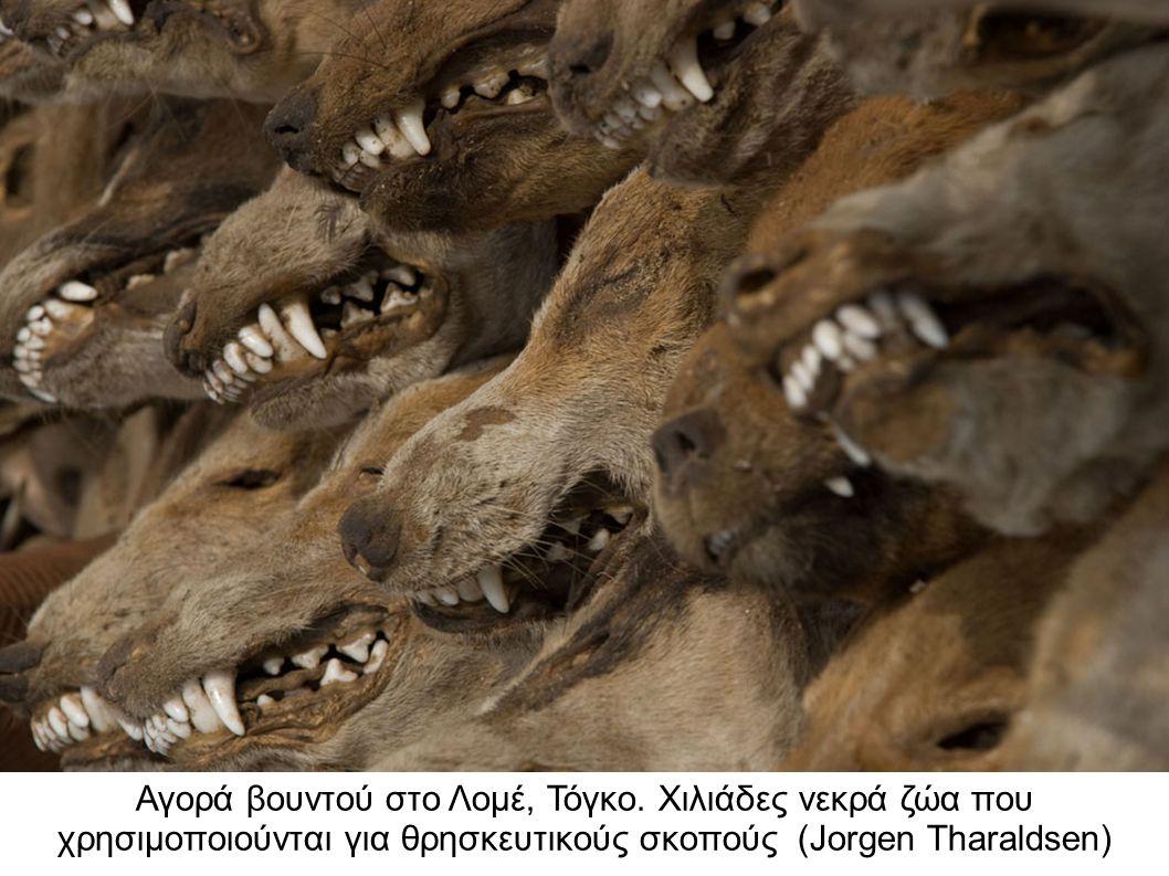 Αγορά βουντού στο Λομέ, Τόγκο. Χιλιάδες νεκρά ζώα που χρησιμοποιούνται για θρησκευτικούς σκοπούς (Jorgen Tharaldsen)