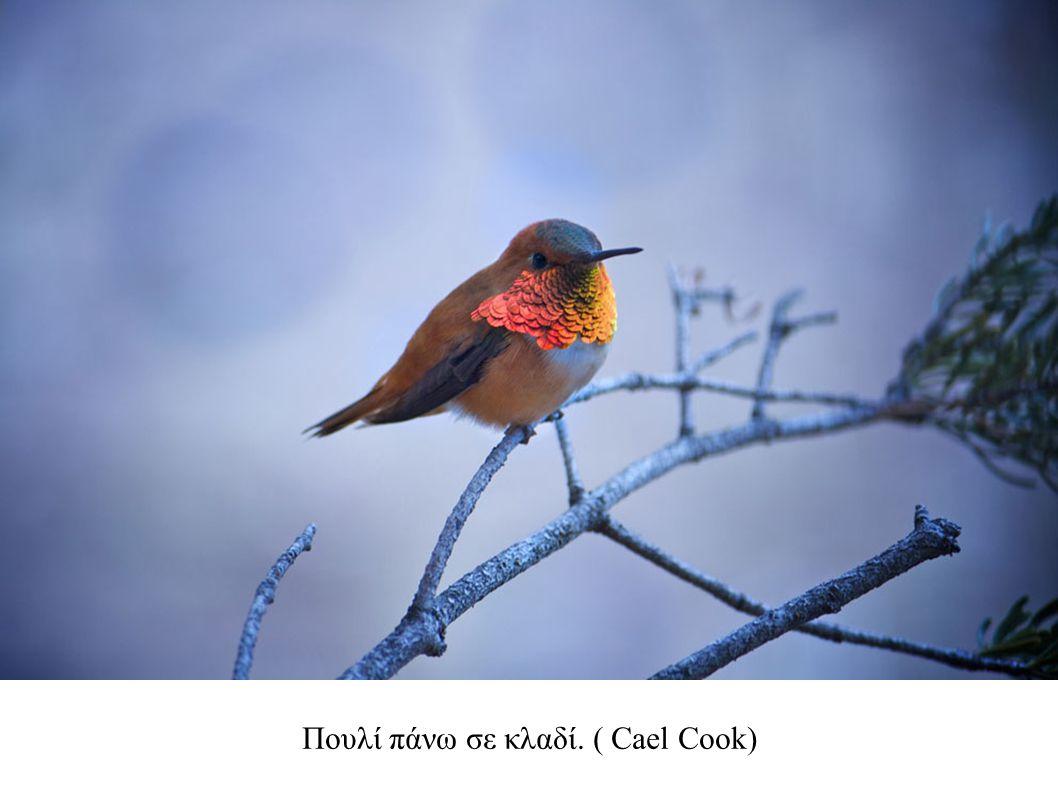Πουλί πάνω σε κλαδί. ( Cael Cook)