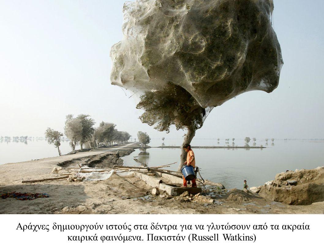 Αράχνες δημιουργούν ιστούς στα δέντρα για να γλυτώσουν από τα ακραία καιρικά φαινόμενα. Πακιστάν (Russell Watkins)