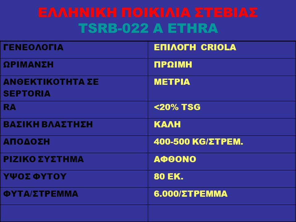 ΕΛΛΗΝΙΚΗ ΠΟΙΚΙΛΙΑ ΣΤΕΒΙΑΣ TSRB-022 A ETHRA ΓΕΝΕΟΛΟΓΙΑ ΕΠΙΛΟΓΗ CRIOLA ΩΡΙΜΑΝΣΗ ΠΡΩΙΜΗ ΑΝΘΕΚΤΙΚΟΤΗΤΑ ΣΕ SEPTORIA ΜΕΤΡΙΑ RA <20% TSG ΒΑΣΙΚΗ ΒΛΑΣΤΗΣΗ ΚΑΛΗ ΑΠΟΔΟΣΗ 400-500 KG/ΣΤΡΕΜ.