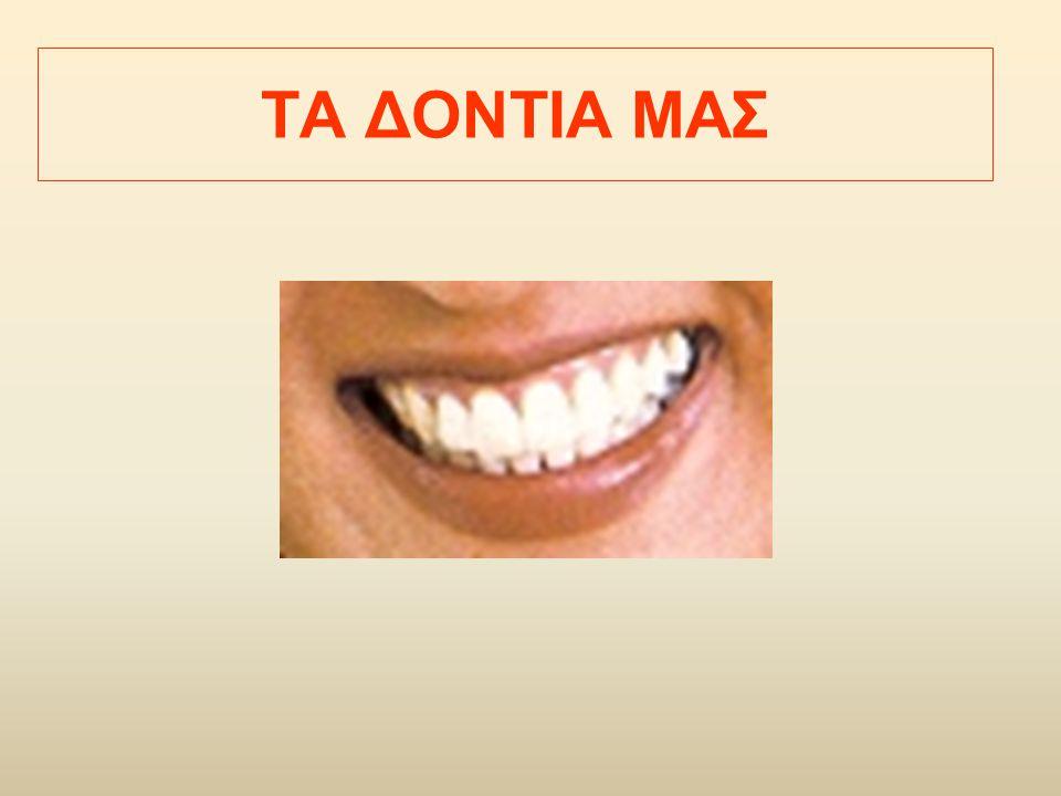 Κοπτήρες (1): τα 4 μπροστινά, άνω και κάτω.Πλατιά δόντια με μικρή επιφάνεια.