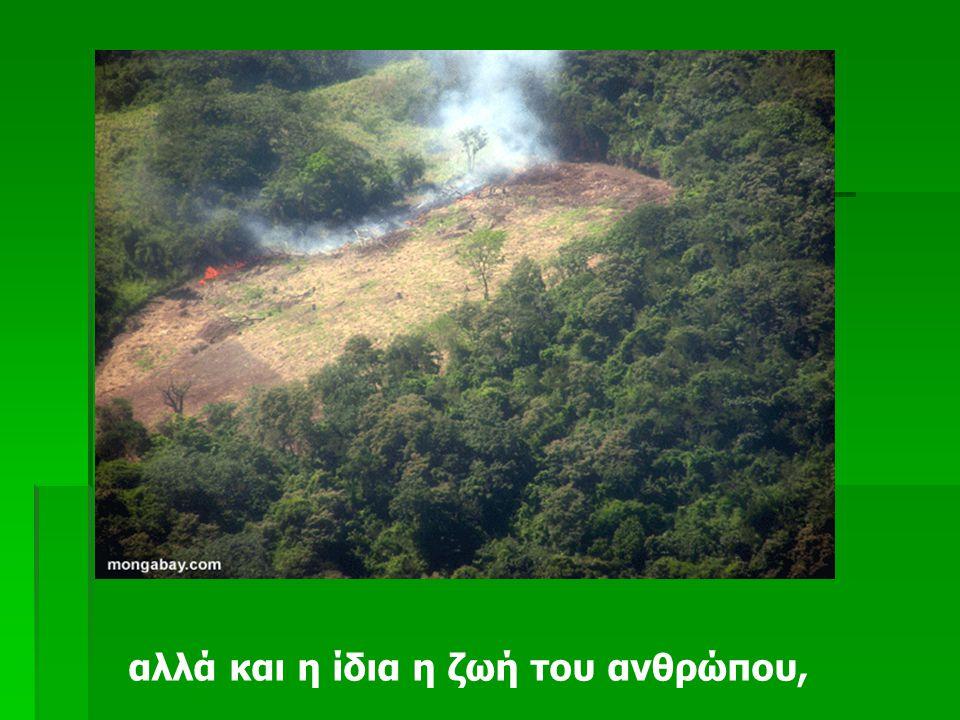 Και όταν καταστρέφεται το δάσος, καταστρέφεται όχι μόνο ένας τεράστιος πλούτος,
