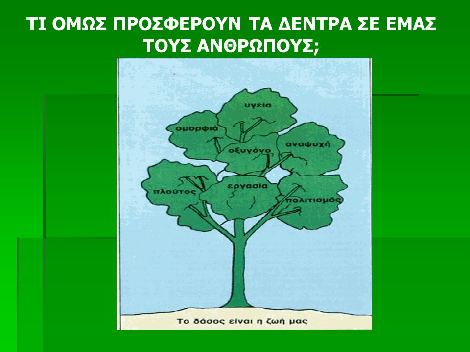 Τα περισσότερα από τα δέντρα που είδατε να φλέγονται στις οθόνες σας το καλοκαίρι χρειάζονται τουλάχιστον 20 χρόνια για να ξαναγίνουν όπως ήταν. Τα έλ