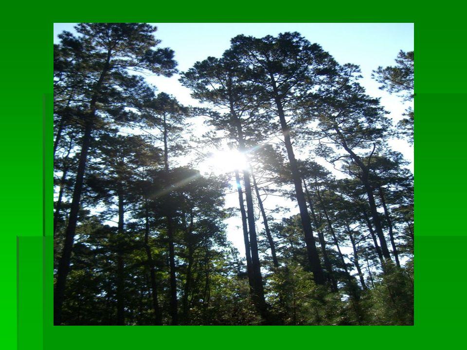 Τίποτα δεν είναι πιο όμορφο από την απολαυστικότητα των δασών πριν την ανατολή του ηλίου. ~ Τζορτζ Γουάσινγκτον Κάρβερ Τζορτζ Γουάσινγκτον ΚάρβερΤζορτζ Γουάσινγκτον Κάρβερ