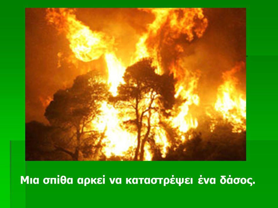Το καλοκαίρι που μας πέρασε όλοι γίναμε μάρτυρες ενός τεράστιου εγκλήματος προς τη φύση και τα δάση μας σε όλο τον κόσμο.