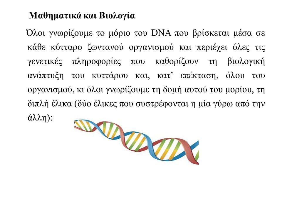 Μαθηματικά και Βιολογία Όλοι γνωρίζουμε το μόριο του DNA που βρίσκεται μέσα σε κάθε κύτταρο ζωντανού οργανισμού και περιέχει όλες τις γενετικές πληροφορίες που καθορίζουν τη βιολογική ανάπτυξη του κυττάρου και, κατ' επέκταση, όλου του οργανισμού, κι όλοι γνωρίζουμε τη δομή αυτού του μορίου, τη διπλή έλικα (δύο έλικες που συστρέφονται η μία γύρω από την άλλη):