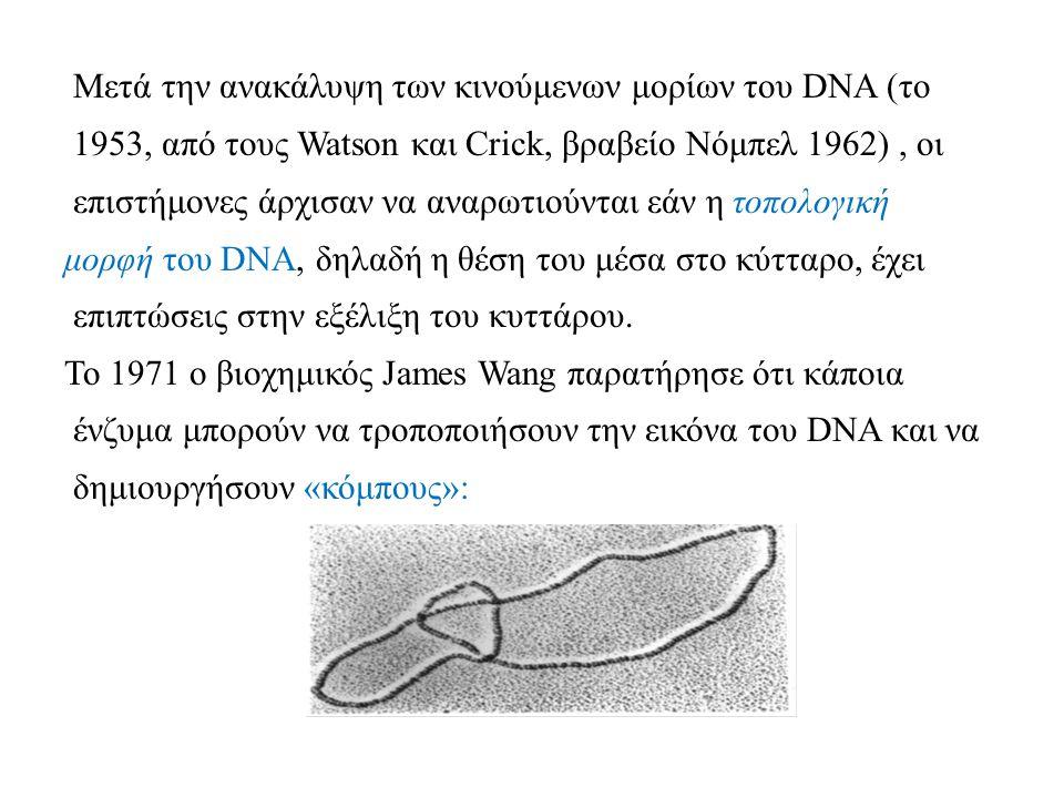 Μετά την ανακάλυψη των κινούμενων μορίων του DNA (το 1953, από τους Watson και Crick, βραβείο Νόμπελ 1962), οι επιστήμονες άρχισαν να αναρωτιούνται εάν η τοπολογική μορφή του DNA, δηλαδή η θέση του μέσα στο κύτταρο, έχει επιπτώσεις στην εξέλιξη του κυττάρου.