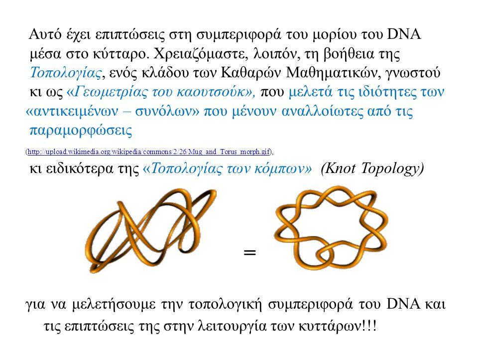 Αυτό έχει επιπτώσεις στη συμπεριφορά του μορίου του DNA μέσα στο κύτταρο.
