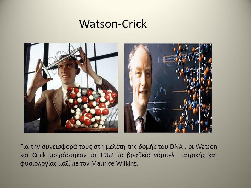 Watson-Crick Για την συνεισφορά τους στη μελέτη της δομής του DNA, οι Watson και Crick μοιράστηκαν το 1962 το βραβείο νόμπελ ιατρικής και φυσιολογίας μαζί με τον Maurice Wilkins.