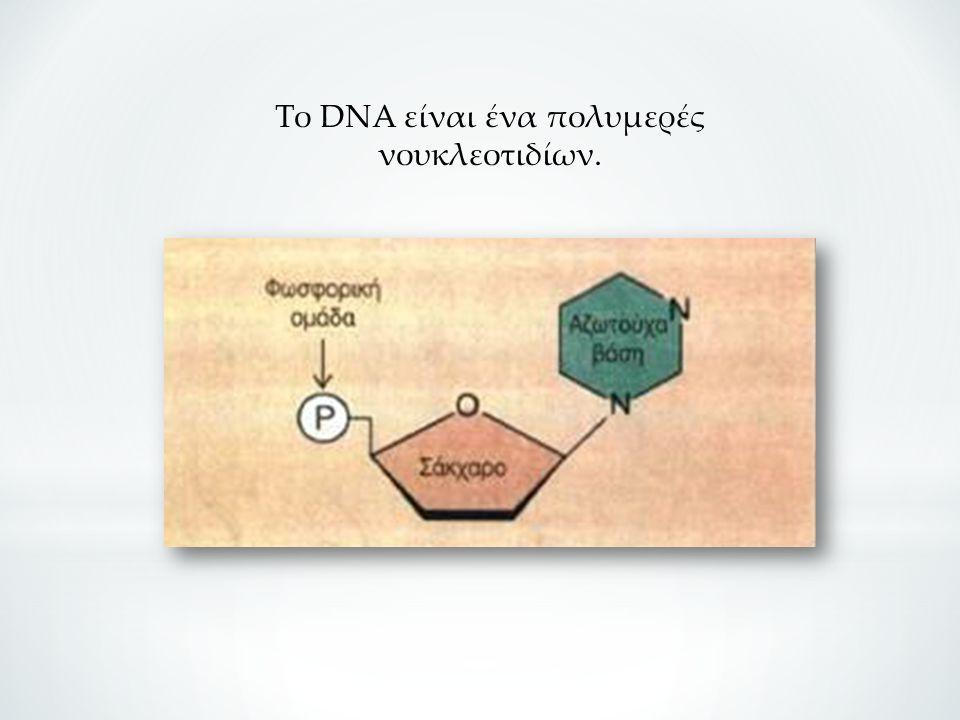 Το DNA είναι ένα πολυμερές νουκλεοτιδίων.
