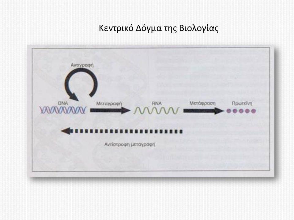 Κεντρικό Δόγμα της Βιολογίας