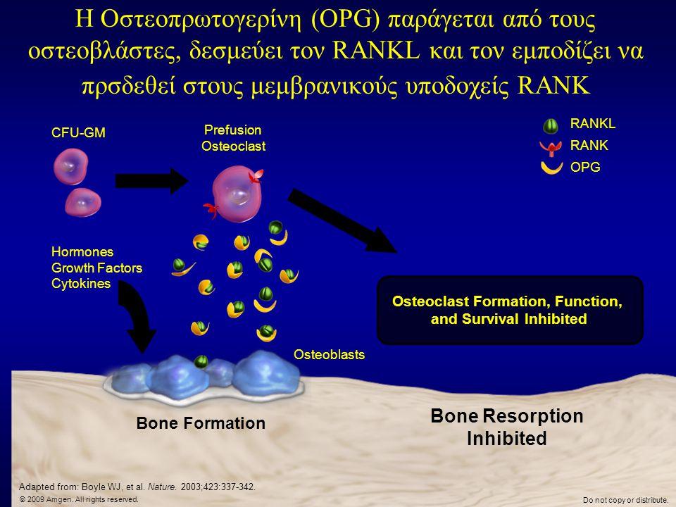 Η Οστεοπρωτογερίνη (OPG) παράγεται από τους οστεοβλάστες, δεσμεύει τον RANKL και τον εμποδίζει να πρσδεθεί στους μεμβρανικούς υποδοχείς RANK Bone Form