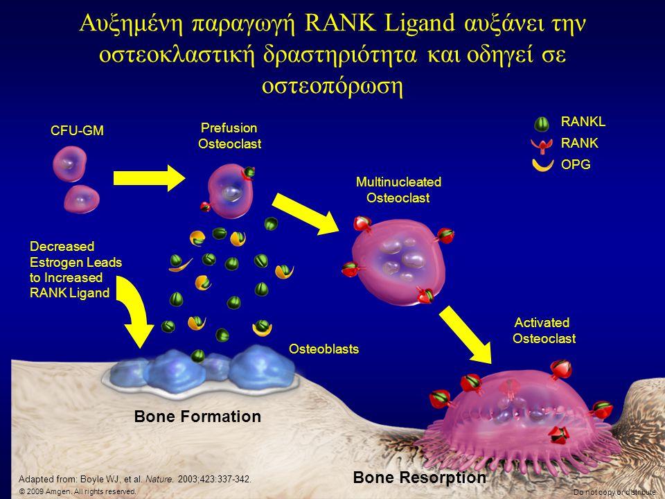 Αυξημένη παραγωγή RANK Ligand αυξάνει την οστεοκλαστική δραστηριότητα και οδηγεί σε οστεοπόρωση Bone Formation Bone Resorption Activated Osteoclast CF