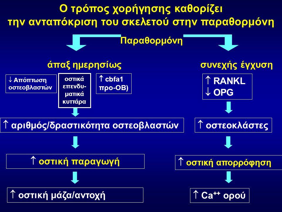 άπαξ ημερησίωςσυνεχής έγχυση  RANKL  OPG  οστεοκλάστες  οστική απορρόφηση  Ca ++ ορού  Απόπτωση οστεοβλαστών  cbfa1 προ-ΟΒ)  αριθμός/δραστικότ