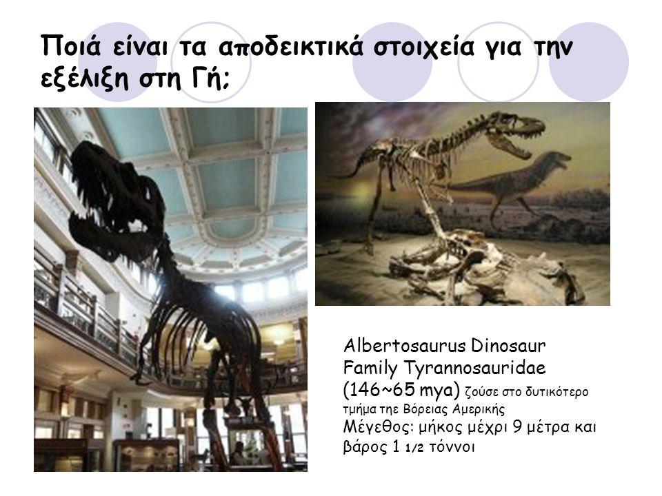 Ποιά είναι τα αποδεικτικά στοιχεία για την εξέλιξη στη Γή; Albertosaurus Dinosaur Family Tyrannosauridae (146~65 mya) ζούσε στο δυτικότερο τμήμα τηε Βόρειας Αμερικής Μέγεθος: μήκος μέχρι 9 μέτρα και βάρος 1 1/2 τόννοι
