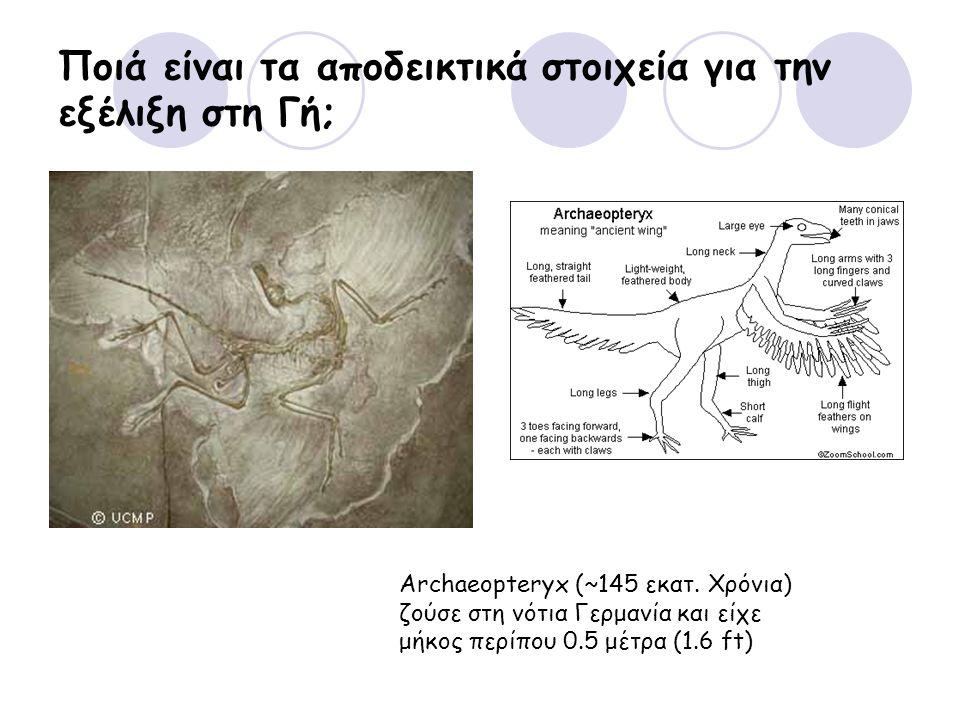 Ποιά είναι τα αποδεικτικά στοιχεία για την εξέλιξη στη Γή; Archaeopteryx (~145 εκατ. Χρόνια) ζούσε στη νότια Γερμανία και είχε μήκος περίπου 0.5 μέτρα