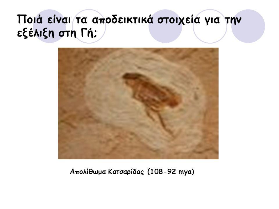 Ποιά είναι τα αποδεικτικά στοιχεία για την εξέλιξη στη Γή; Απολίθωμα Κατσαρίδας (108-92 mya)
