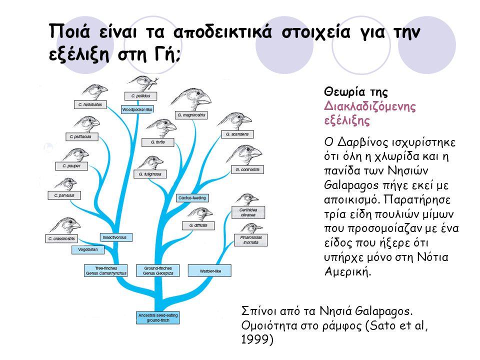 Ποιά είναι τα αποδεικτικά στοιχεία για την εξέλιξη στη Γή; Θεωρία της Διακλαδιζόμενης εξέλιξης Ο Δαρβίνος ισχυρίστηκε ότι όλη η χλωρίδα και η πανίδα των Νησιών Galapagos πήγε εκεί με αποικισμό.