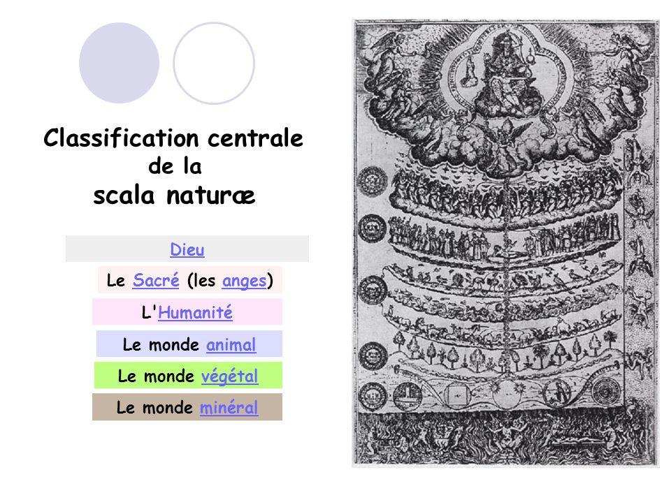 Classification centrale de la scala naturæ Dieu Le Sacré (les anges)Sacréanges L HumanitéHumanité Le monde animalanimal Le monde végétalvégétal Le monde minéralminéral