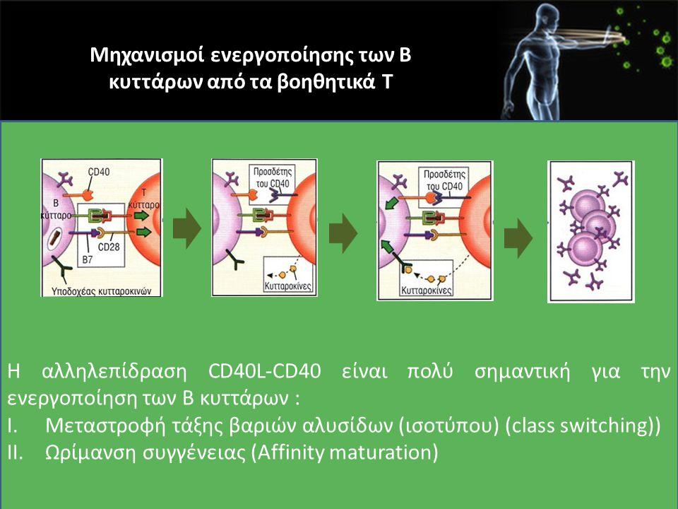 Μηχανισμοί ενεργοποίησης των Β κυττάρων από τα βοηθητικά Τ Η αλληλεπίδραση CD40L-CD40 είναι πολύ σημαντική για την ενεργοποίηση των Β κυττάρων : I.Μετ